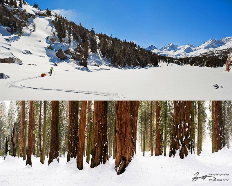 Skier pulling a pulka in Rock Creek Basin. Giant Sequoias.