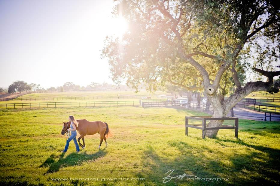 Santa Ynez Valley horse pasture.