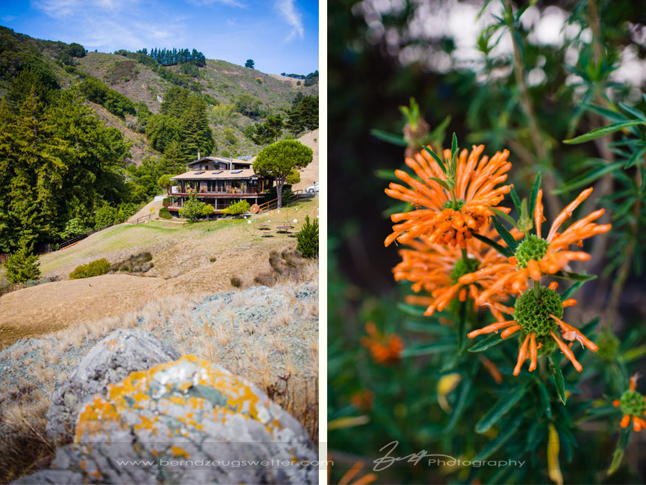 Big Sur wedding photography, private estate and detail of flower.