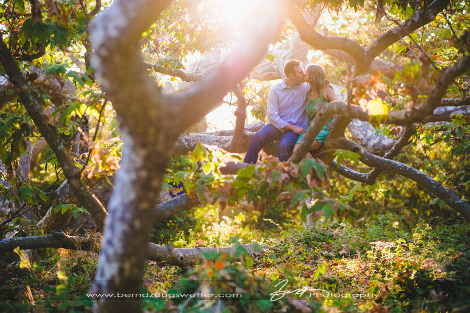 Engagement session, sycamore tree at El Capitan State Beach.