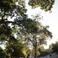 Couple walking in evening light, Firestone Vineyard, Santa Ynez.