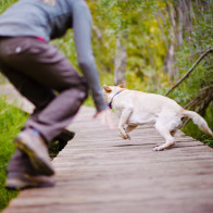 running after the dog at engagement session.